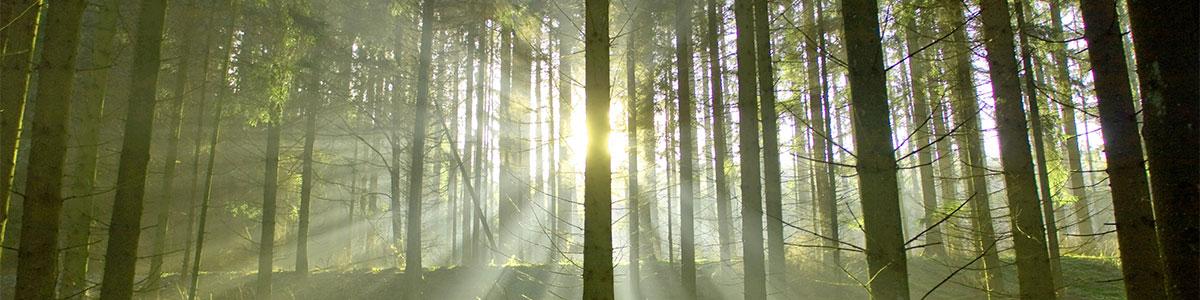 Slider_Background_Waldbauverein_Ammerland_2